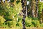 Gander River photos 019.jpg