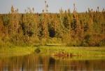 Gander River photos 032.jpg