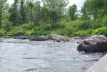 Gander River photos 054.jpg