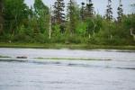 Gander River photos 015.jpg